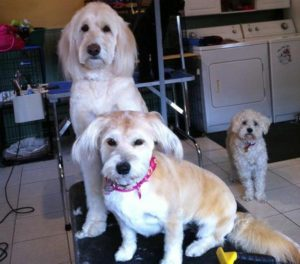 Clean and happy dogs love dog spa brantford