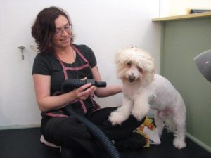 Blow Drying the dog's fur in a gentle manner