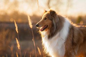 The Dog Spa, Pet Grooming in Brantford, Ontario, Animal Grooming in Brantford, Ontario, Dog Grooming in Brantford, Ontario, Dog Groomer in Brantford, Ontario, Grooming Services in Brantford, Ontario