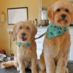 Freshly cut and clean dogs with cute bandannas