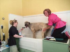 Happy dog being washed in a bathtub