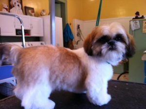 Grooming for Small and Large Breeds